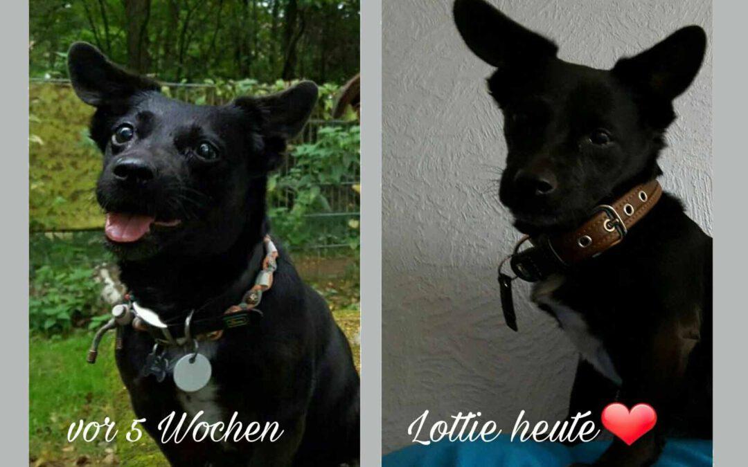 Lottie und die Folgen eines vestibulären Syndroms